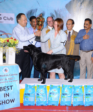 Dog Show In Kodaikanal